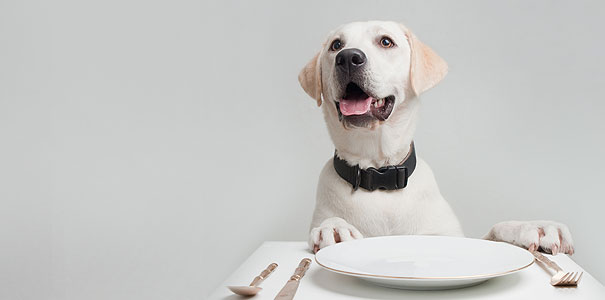 Labrador Dinner Table