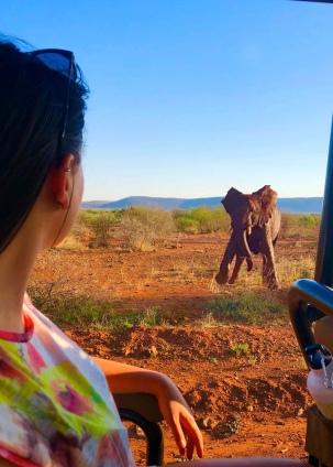 Elephant Dancing - South Africa - Safari