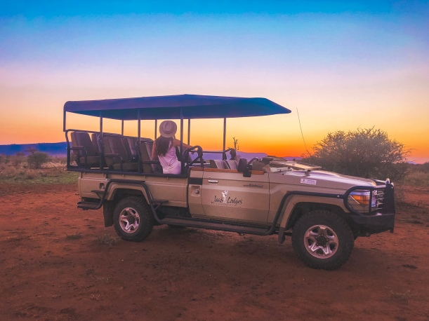 Sunset - Lion - South Africa - Madikwe