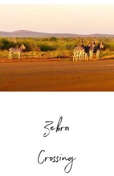 Zebra Jaci's Lodge Safari South Africa