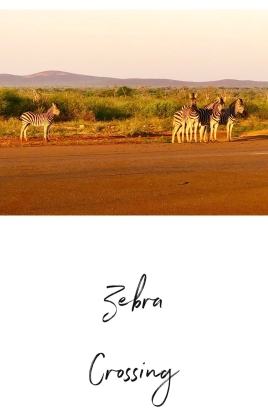 Zebra Jaci's Lodge Safari South Africa