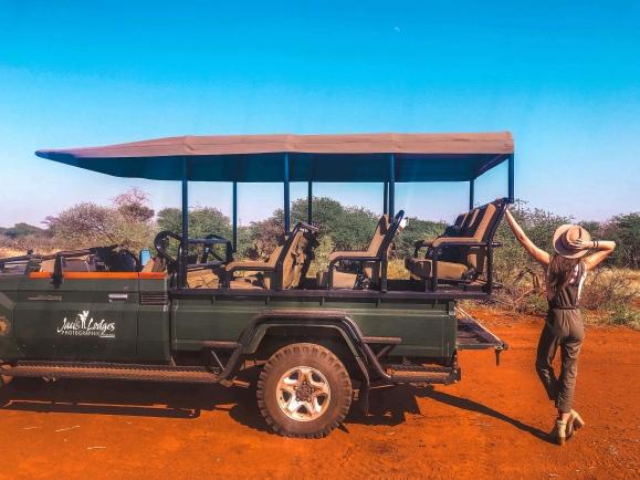 Lion - South Africa - Madikwe